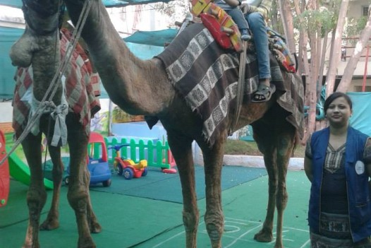 Camel visit in school