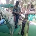Horse visit in school